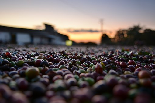 Why should you choose Fair Trade Coffee over conventionally-grown coffee?
