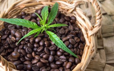 What is fair trade coffee? Why is it an ethical issue?