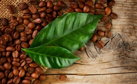Review of Dominican coffee