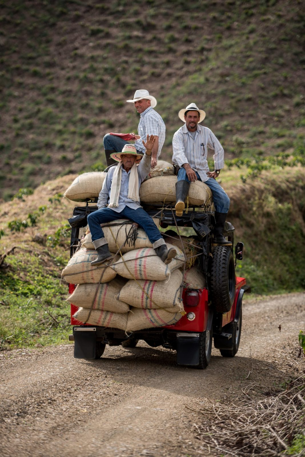 What is Bolivian Coffee?